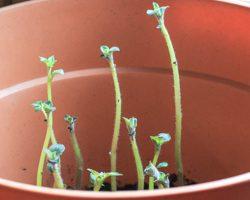 Weekend Gardening: Growing Potatoes in the Winter, Part 1