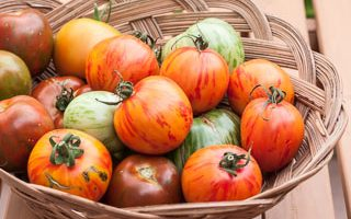 Weekend Gardening: Zebra Tomatoes