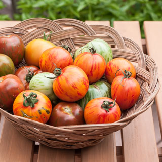 Weekend Gardening: Zebra Tomatoes - Andrea Meyers