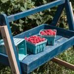 The Farm Project: Wegmeyer Farms (Raspberry Sauce)