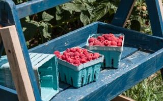 The Farm Project: Wegmeyer Farms (Raspberry Sauce)