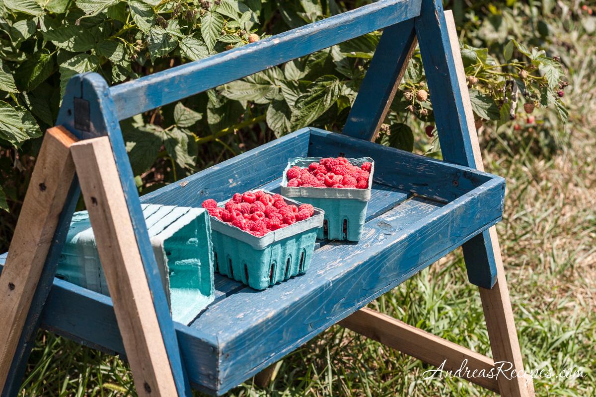 Wegmeyer Farms, raspberry picking - Andrea Meyers