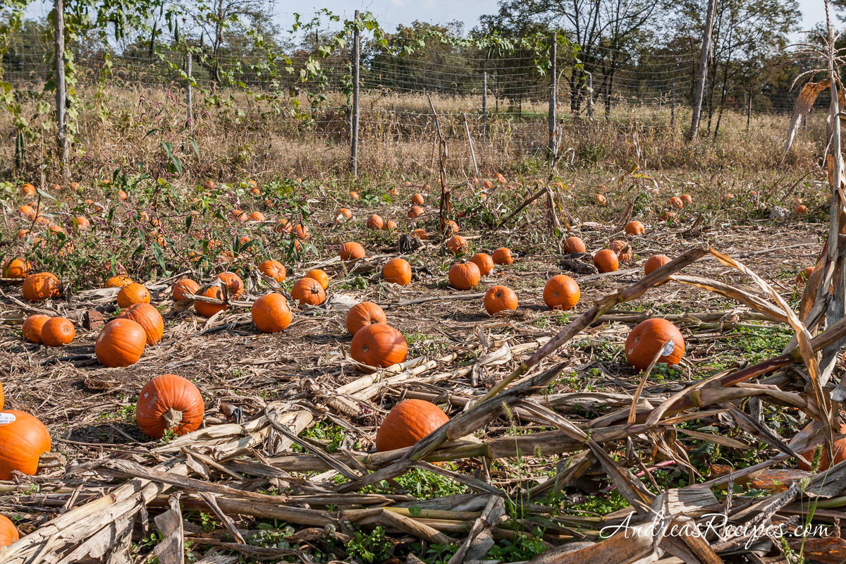 Ticonderoga Farms autumn pumpkins - Andrea Meyers