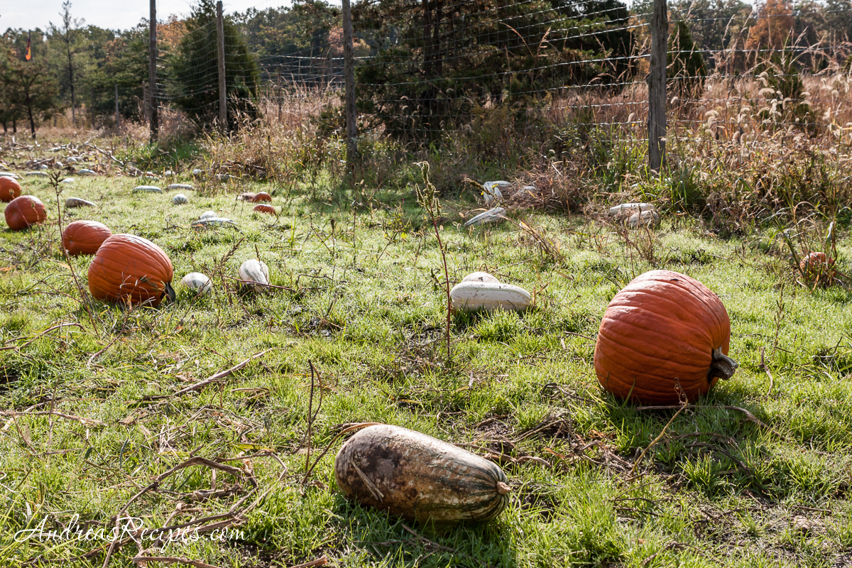Ticonderoga Farms, autumn pumpkins - Andrea Meyers