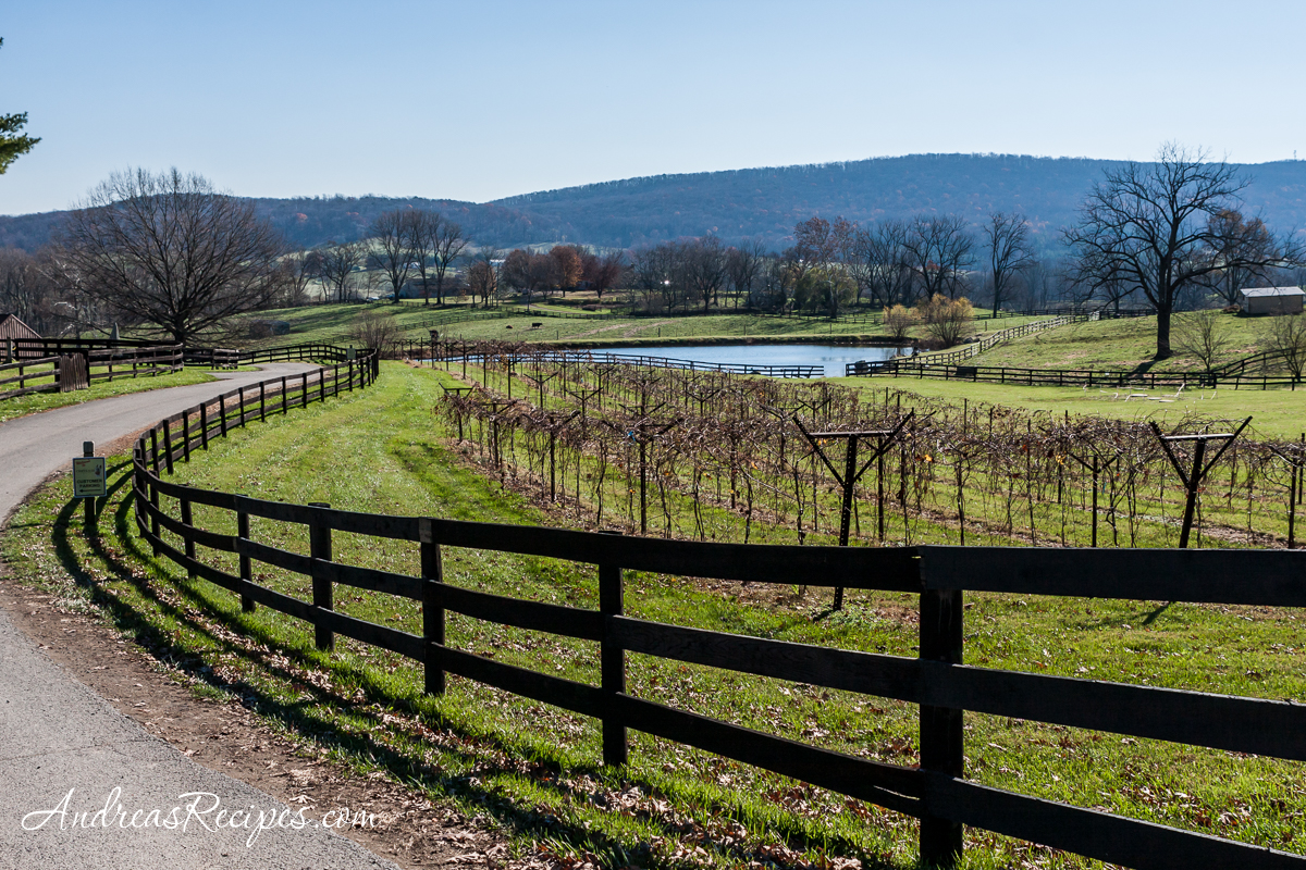Chrysalis Vineyards in autumn - Andrea Meyers