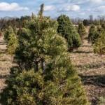 Ticonderoga Farms: Christmas on the Farm
