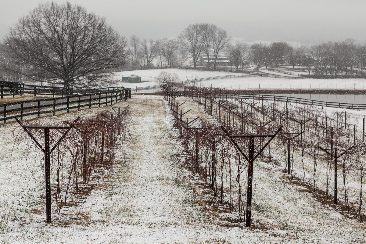 Chrysalis Winery in Winter - Andrea Meyers