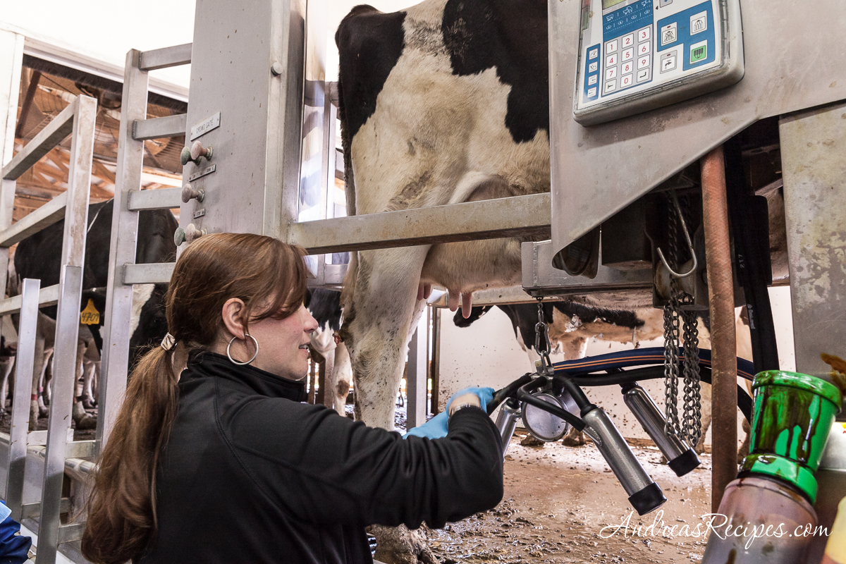 Andrea milking the cows - Andrea Meyers