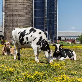 Al-Mara Farm: Spring on a Dairy Farm - Andrea Meyers