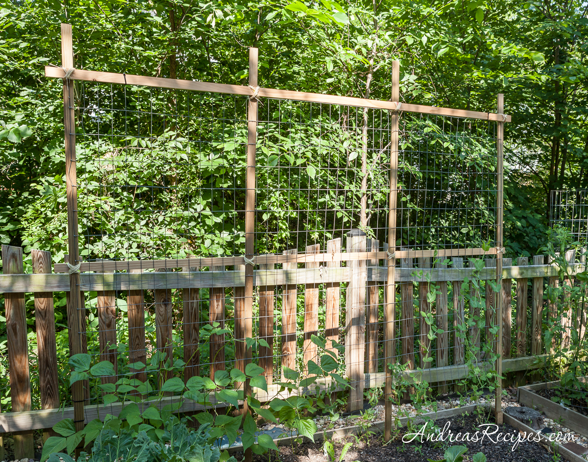 Trellis for peas and beans - Andrea Meyers