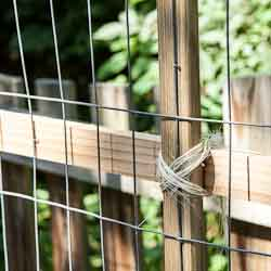 Weekend Gardening: Building a Trellis for Beans and Peas