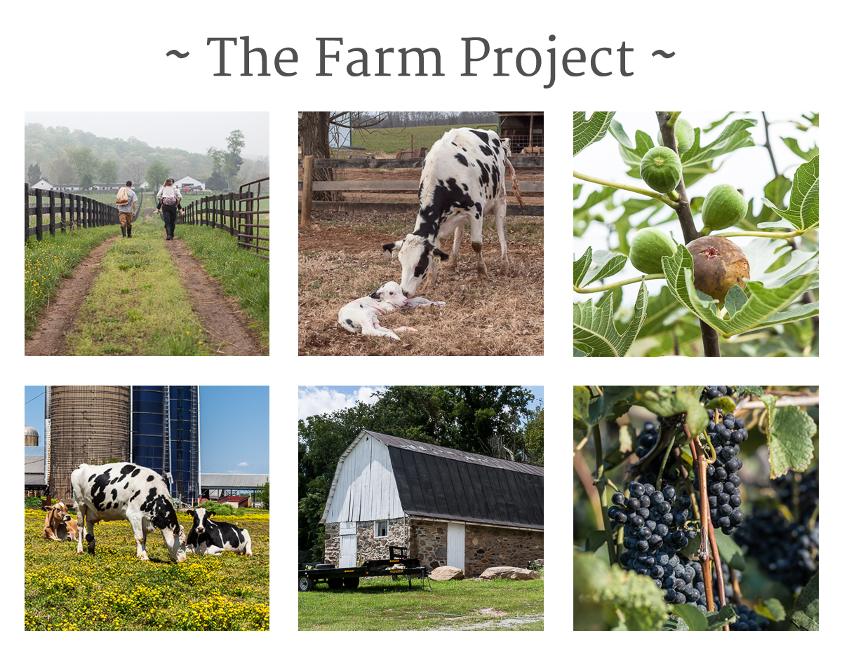 The Farm Project banner, with thumbnails of each farm