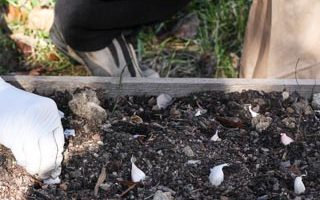 Weekend Gardening: Catching Up on Autumn Planting